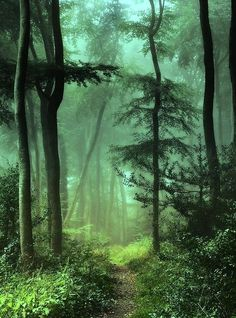 Misty woodland path (England) by Ceri David Jones cr. Forest Path, Tree Forest, Forest Trail, Foggy Forest, Misty Forest, Forest Grove, Magic Forest, Beautiful World, Beautiful Places