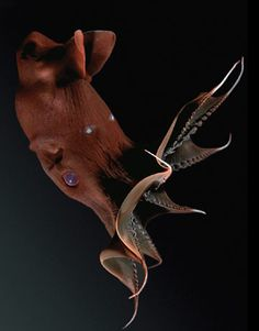 Vampire Squid  It lives in Monterey Bay and is called the vampire squid (and it appears to deserve the name). What else do you need to know?