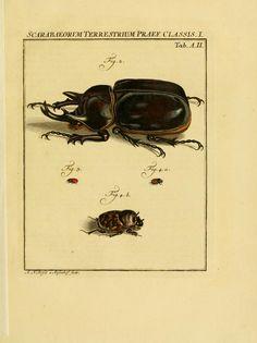 D.1,pt.2 - De natuurlyke historie der insecten; - 1764  scarab beetle