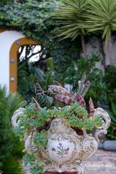 centro de mesa com suculentas no jardim da Casa Catita, Algarve-Portugal