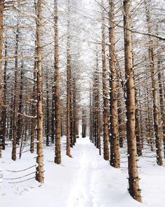 Shared by Find images and videos about beauty, nature and winter on We Heart It - the app to get lost in what you love. Winter Szenen, Winter Love, Winter Is Coming, Winter Christmas, Winter Trees, Winter Photography, Nature Photography, Shotting Photo, Snow Scenes