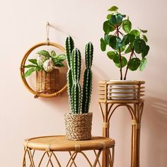 X Rattan Round Hanging Planter Natural - Opalhouse™ : Target Fake Plants Decor, Faux Plants, Plant Decor, Indoor Plants, Fake Potted Plants, Indoor Flowers, Succulent Plants, Cacti, Indoor Garden