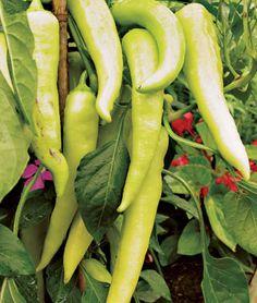 Sweet Bananarama Pepper Seeds and Plants, Vegetable Gardening at Burpee.com