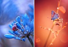 My name is Magda Wasiczek, I am a flower & nature photographer based in Trzebinia, Poland. Photography to me is a tool of raising the awareness to the beauty of nature. I've learned to see invisible things, to enjoy million small details, which I did not pay attention to before.