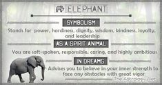 What do elephants symbolize, as a spirit animal (totem animal), white elephant meaning, significance of dreams about elephants Elephant Spirit Animal, Elephant Quotes, Spirit Animal Totem, Animal Spirit Guides, Elephant Love, Animal Totems, Elephant Art, Small Elephant, African Elephant