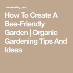 How To Create A Bee-Friendly Garden | Organic Gardening Tips And Ideas