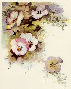 vintage flower illustrations - Google Search