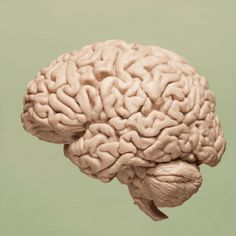 One Thing You Can Do Now To Keep Your Brain From Shrinking Later