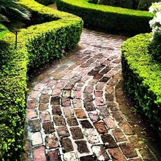 Love the look of this - could have been here forever! reclaimed brick & boxwood hedge