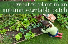 What to plant in an autumn vegetable patch