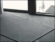 Funny gif dump gifs) - The Laughter Ward Fail Video, Friday Humor, Funny Vines, Can't Stop Laughing, Funny Cute, Freaking Hilarious, Funny Fails, Funny Photos, I Laughed