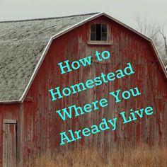 """The (mis)Adventures of a """"Born Again"""" Farm Girl: How to Homestead Where You Already Live"""