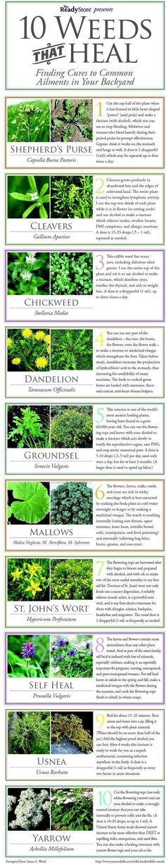Outdoors Tips? Who knew weeds were good for something?   Check out these 10 weeds and their healing properties #SurvivalLife http://SurvivalLife.com