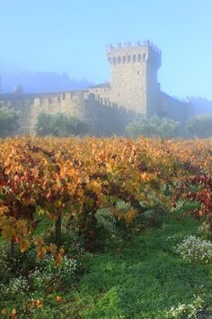 This place has stolen a piece of my heart *sigh*... Castello di Amarosa.