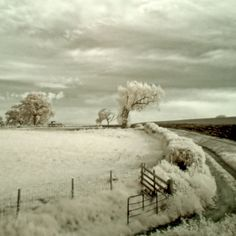 Infrared at Dusk by Dave-Ellis