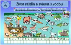 voda a zvierata