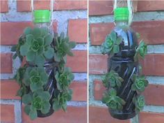 36 DIY Plastic Bottle Projects for Hanging Plant Propagating Succulents, Cacti And Succulents, Planting Succulents, Planting Flowers, Recycled Planters, Recycled Garden, Hanging Planters, Plastic Bottle Planter, Reuse Plastic Bottles