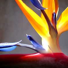Ave Del Paraiso / Bird Of Paradise | Flickr - Photo Sharing!