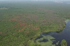 In New Jersey Pines, Trouble Arrives on Six Legs By JUSTIN GILLIS  James Dunn/State Forestry Services An aerial view of Union Lake in Millville, N.J. The yellowing trees show the extent of the damage done by southern pine beetles. A beetle invasion of New Jersey's Pinelands...