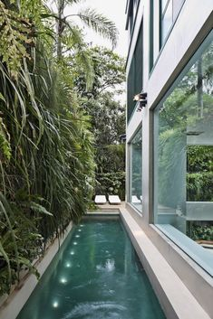 The narrow, elongated pool with a vertical green wall can be seen from inside the apartment. Tagged: Outdoor, Gardens, Side Yard, Vertical Fences, Wall, Lap Pools, Tubs, Shower, Small Patio, Porch, Deck, Landscape Lighting, Large Pools, Tubs, Shower, and Shrubs. Photo 4 of 17 in A Mesmerizing Pool Dominates This Brazilian Home