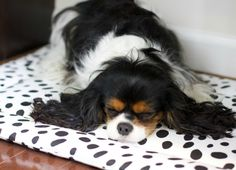 Merlin Mat | Dalmatian Spot by JANERY   --- Washable crate pad / lightweight modern dog bed in black and white spot.  Made in the USA.