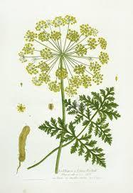 botanical prints - Google Search