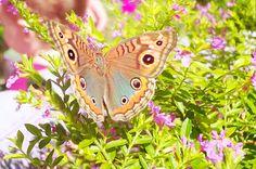 Borboleta de asas lindas