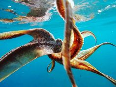 We have seen an octopus on our last several snorkel tours! Action Photography, Landscape Photography, Gopro Video, Gopro Action, Breath In Breath Out, Gopro Hero, Sea Creatures, Under The Sea, Octopus