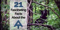 21 Fascinating Appalachian Trail Facts. The Appalachian Trail runs right through Maggie Valley/Waynesville, North Carolina.