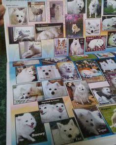 I'm loving my Chicagoland Eskie Rescue 2016 Calendar. All for specializing in American Eskimo dog rescue and re-homing.  This is a portion of the first page when you open it.. beautiful section of The Rainbow Bridge furbabies and there is mine..my beloved Snowy at the corner bottom.  I have my beautiful senior Precious' picture in March.  I have my adorable Feisty Gracie's picture in April.  I have my gorgeous Bratzilla Lola's picture in July.  The month of my wedding Anniversary in August I…