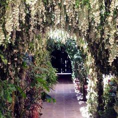 MesAbierta, San Miguel: most inspiring moment: Casa Dragones entry decorated w 100K huele de noche flowers