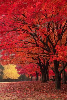 'Red Fall' - photo by tony Lee, via 500px;  Nami Island in South Korea