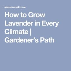 How to Grow Lavender in Every Climate | Gardener's Path