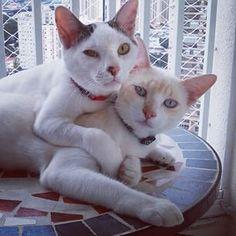 Se você já tem um gato, nem pense em adotar outro. Eles vão brigar o dia inteiro. | 18 motivos para você nunca ter um gato