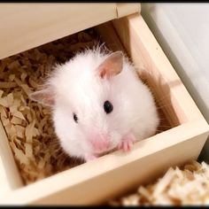 Funny Animals, Cute Animals, What Is Cute, When I Grow Up, Baby Boy, Creatures, Kitty, Dwarf Hamsters, Hamster Stuff