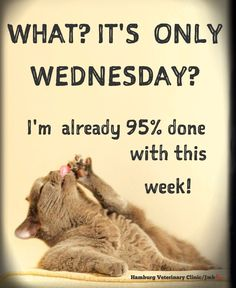 Good Morning Happy Hump Day Quotes and Wednesday Humor - Happy Hump Day! 🐪 Mid Week: Halfway There - Good Morning Happy Hump Day Quotes .Good Morning Happy Hump Day Quotes and Wednesday Humor - Happy Hump Day! 🐪 Mid Week: Halfway There - quotesday. Hump Day Quotes, Hump Day Humor, Funny Good Morning Quotes, Morning Humor, Work Quotes, Jokes Quotes, Daily Quotes, Funny Quotes, Funny Humor