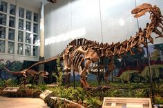 An Apatosaur in a simulated environment, produced by the same company that created the GFS displays.
