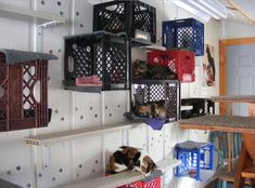 DIY Milk Crate Cat Condo...........WHY NOT ... BRILLIANT FAST EASY CLEAN SOLUTION