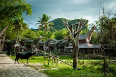 Hidden deep in the south part of Sulawesi is one of Indonesia's most unique destinations, Tana Toraja.