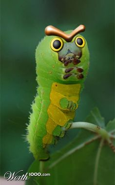 Caterpie... well, there I see why Misty didn't like you :S