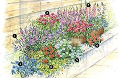 1. Scaevola: Flat half-moons of blue-violet, white or pink earns this plant the name fan...