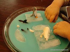 Sensory bowl- blue water, ice cubes, arctic toob.