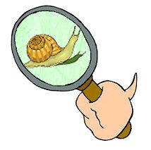 All About Snails