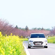 Let's #enjoy with this very #day, this #hour, this #second - #유채꽃 사이로 달리는  지금 이 #순간 을 즐겨요 - #Hyundai #Motor #car #Avante #Elantra #rapeflower #grill #lamp #road #Jeju #driving #daily #photooftheday #현대자동차 #아반떼 #라디에이터 #제주도 #드라이브 #데이트 #여행 #일상 #데일리 #자동차 #자동차그램