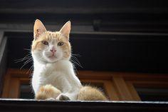 . Cats, Animals, Gatos, Animales, Kitty Cats, Animaux, Animal Memes, Cat Breeds, Kitty