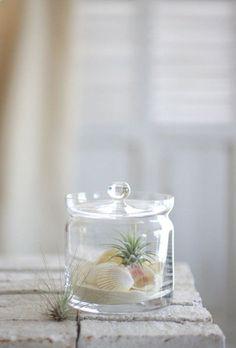 Summer Rashiku arrange the air Plants in Powder Sand & Shell