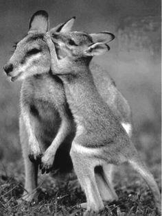 Kangaroo secrets