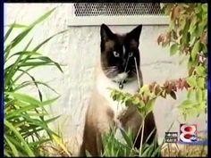 Video: The Purr-fect Cat Burglar