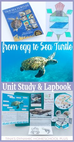From Egg to Sea Turtle Nature Unit Study & Lapbook. Grab this fun sea turtle lapbook for your middle school kids and these easy hands-on activities and ideas to bring your homeschool science to life! CLICK HERE to grab it!