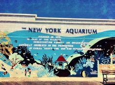 Million Things We Love About Brooklyn | The New York Aquarium